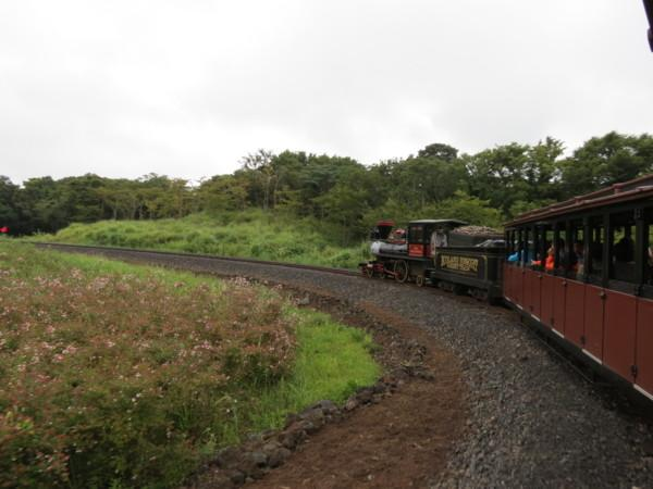 济州岛 eco land 森林小火车